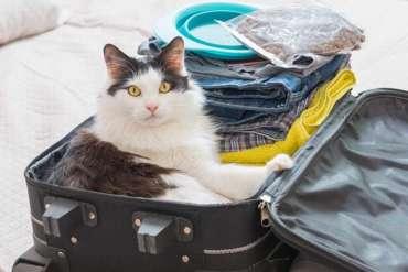 Уезжаете в отпуск? Что делать с кошкой?