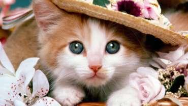 Вы приобрели котенка!